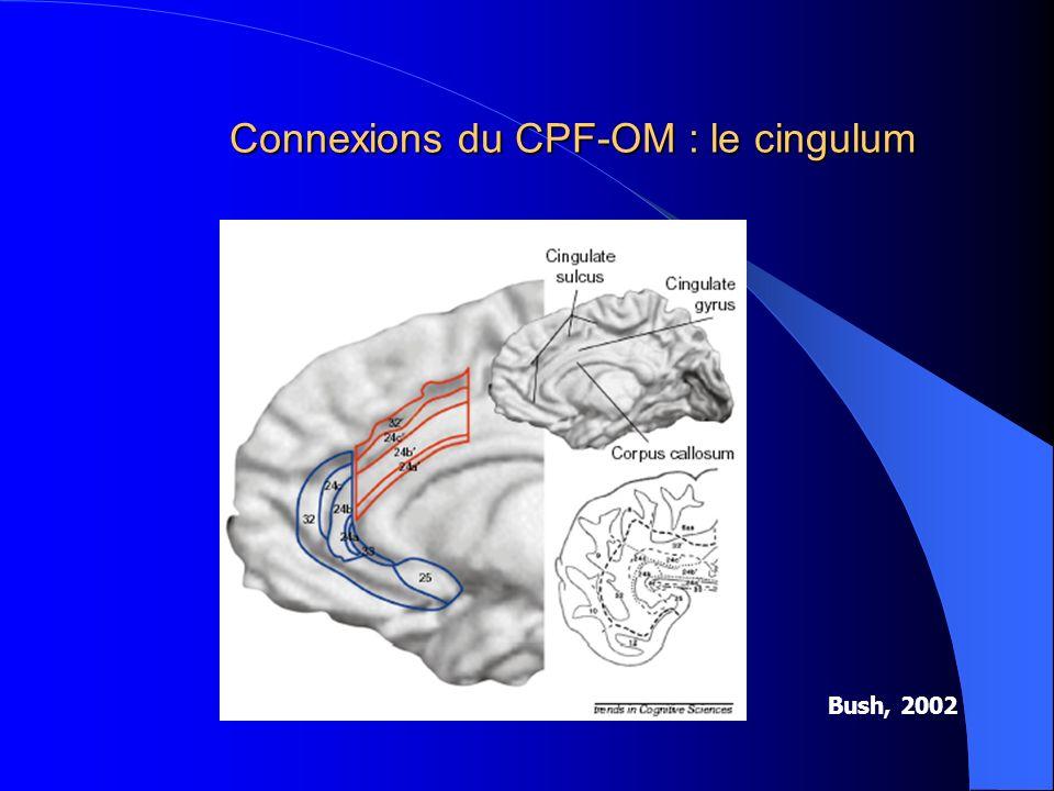 Connexions du CPF-OM : le cingulum