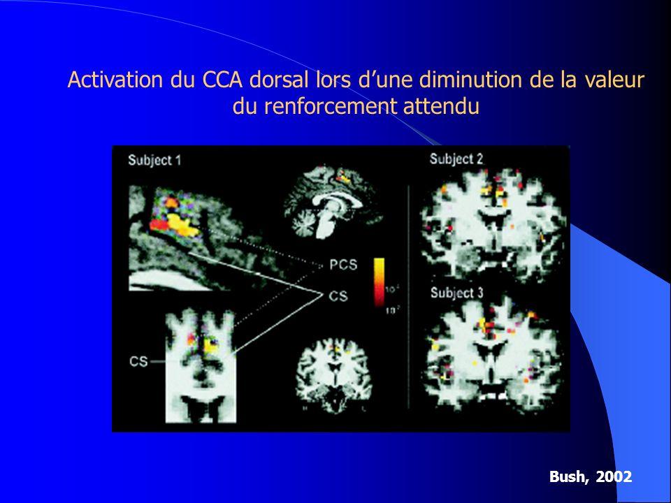 Activation du CCA dorsal lors d'une diminution de la valeur du renforcement attendu