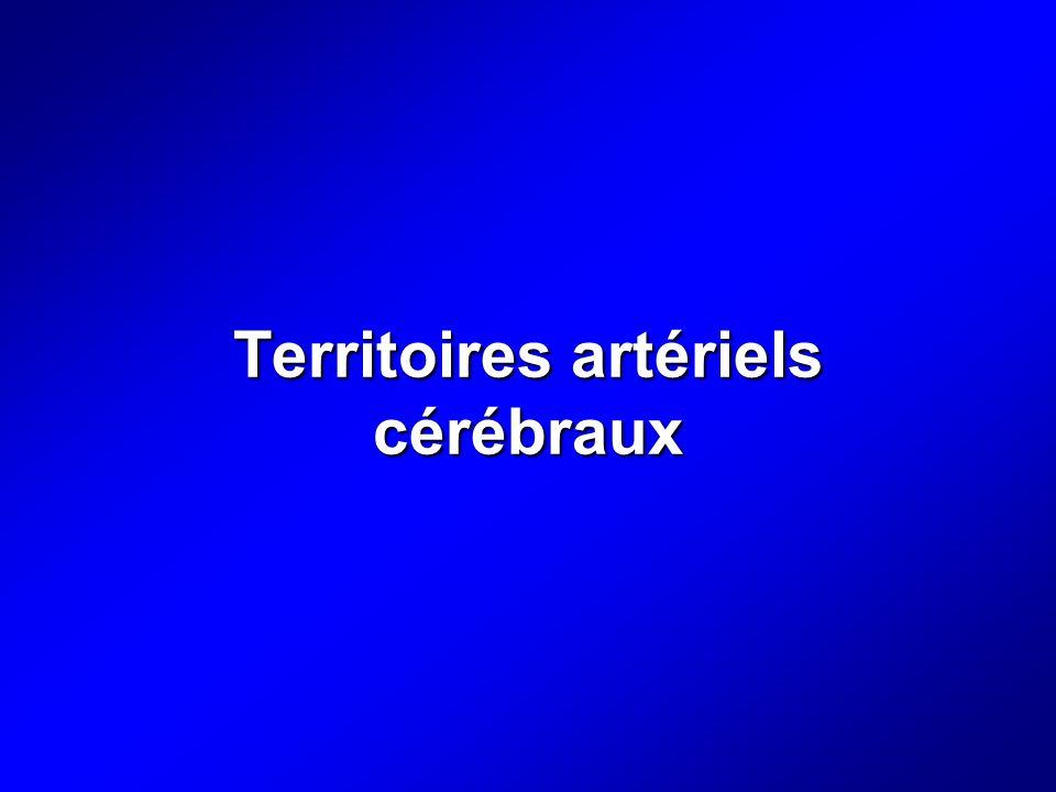 Territoires artériels cérébraux