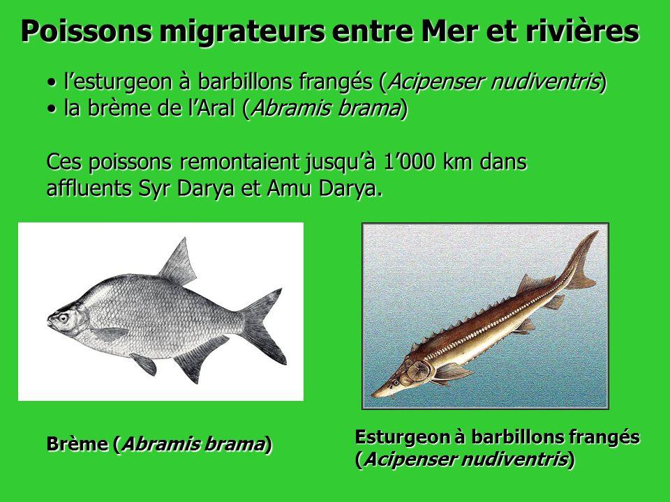 Poissons migrateurs entre Mer et rivières
