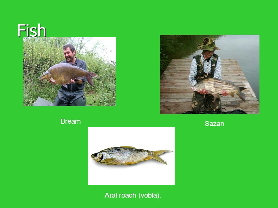 Fish Bream Sazan Aral roach (vobla).