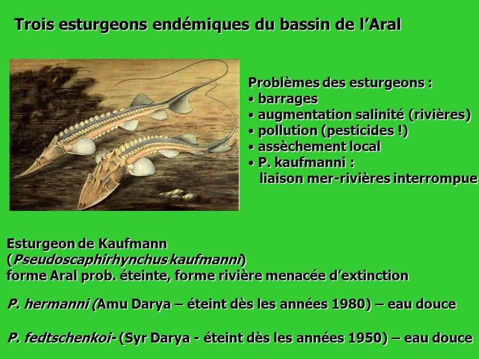 Trois esturgeons endémiques du bassin de l'Aral