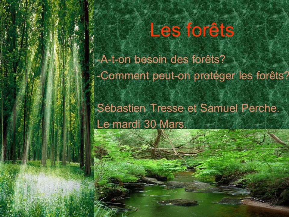 Les forêts -A-t-on besoin des forêts