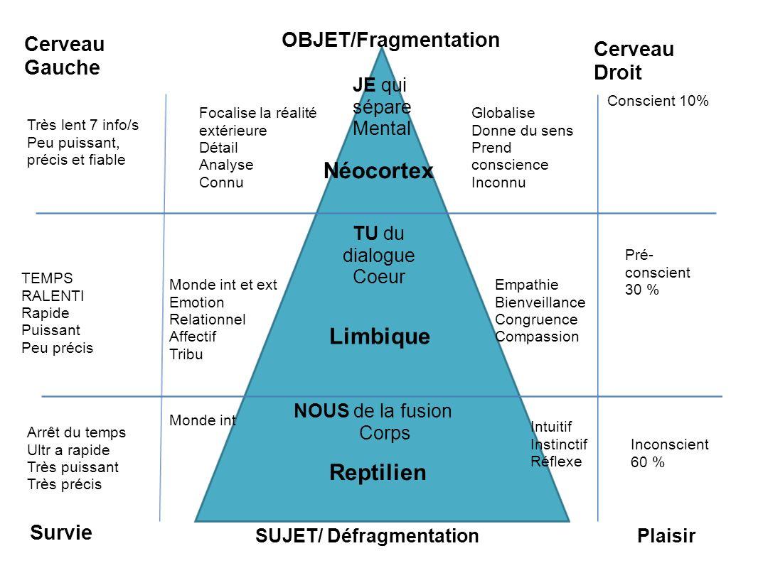 Néocortex Limbique Reptilien OBJET/Fragmentation Cerveau Gauche
