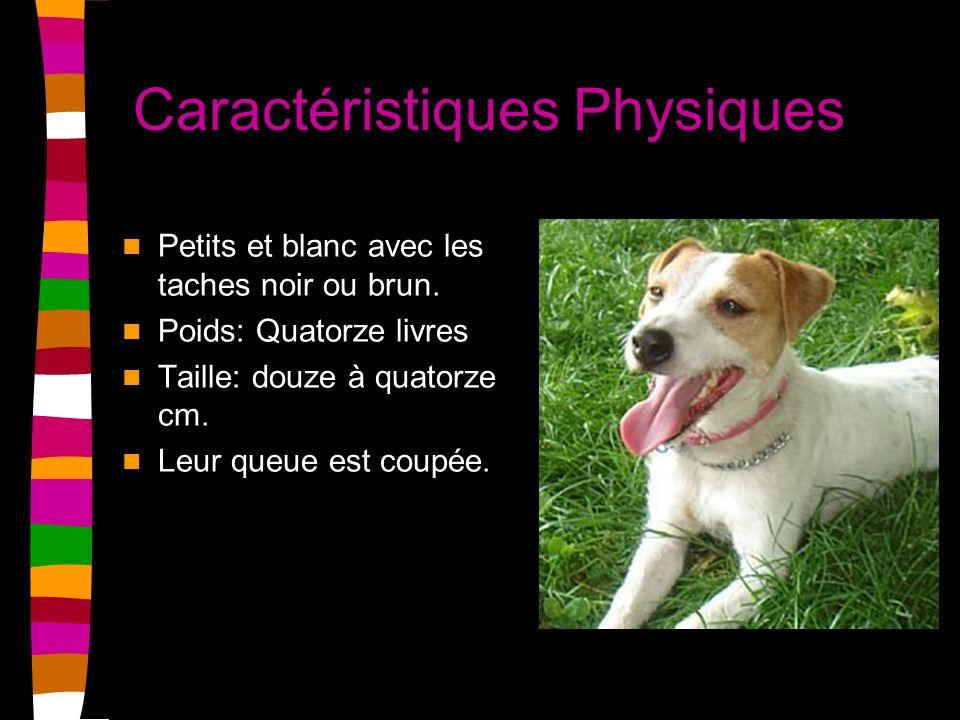 Caractéristiques Physiques