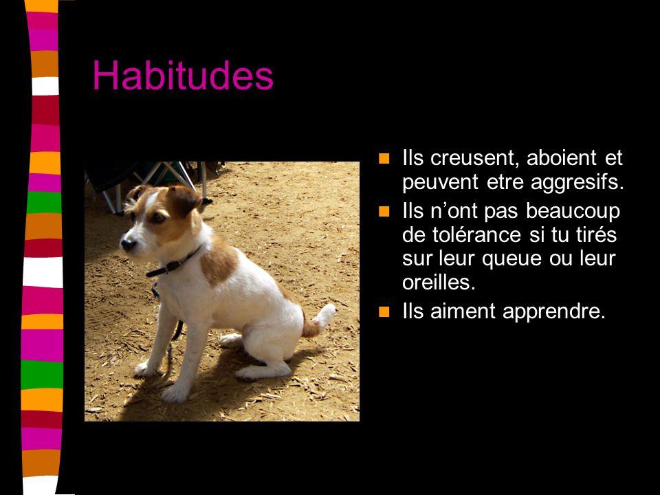 Habitudes Ils creusent, aboient et peuvent etre aggresifs.