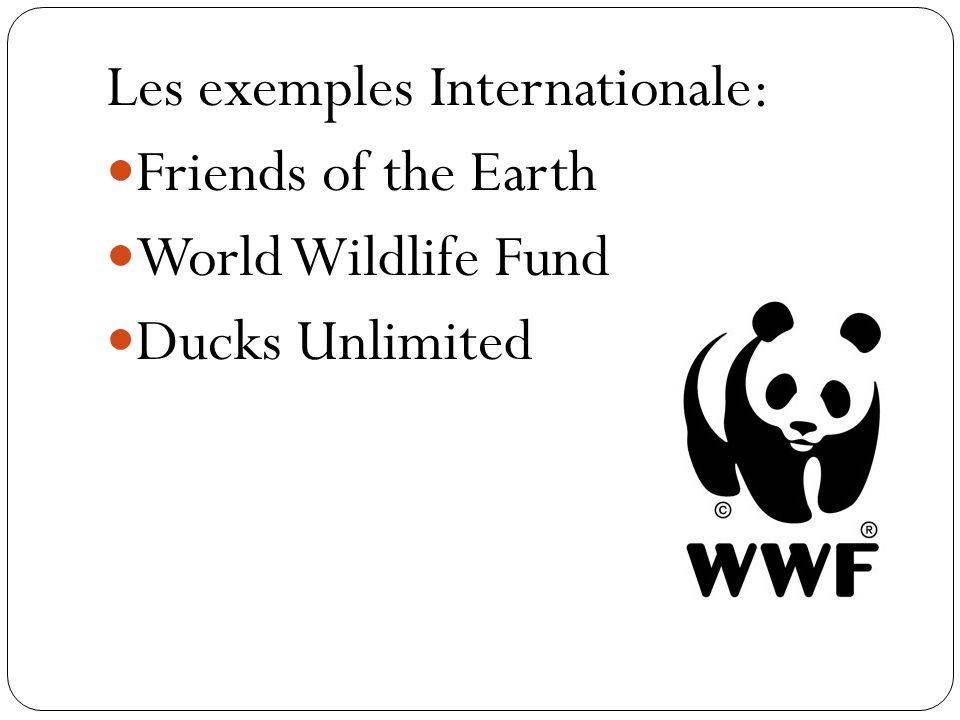 Les exemples Internationale: