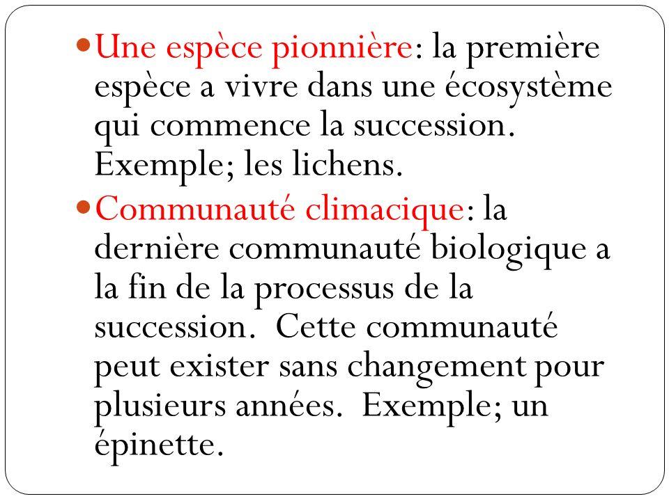 Une espèce pionnière: la première espèce a vivre dans une écosystème qui commence la succession. Exemple; les lichens.
