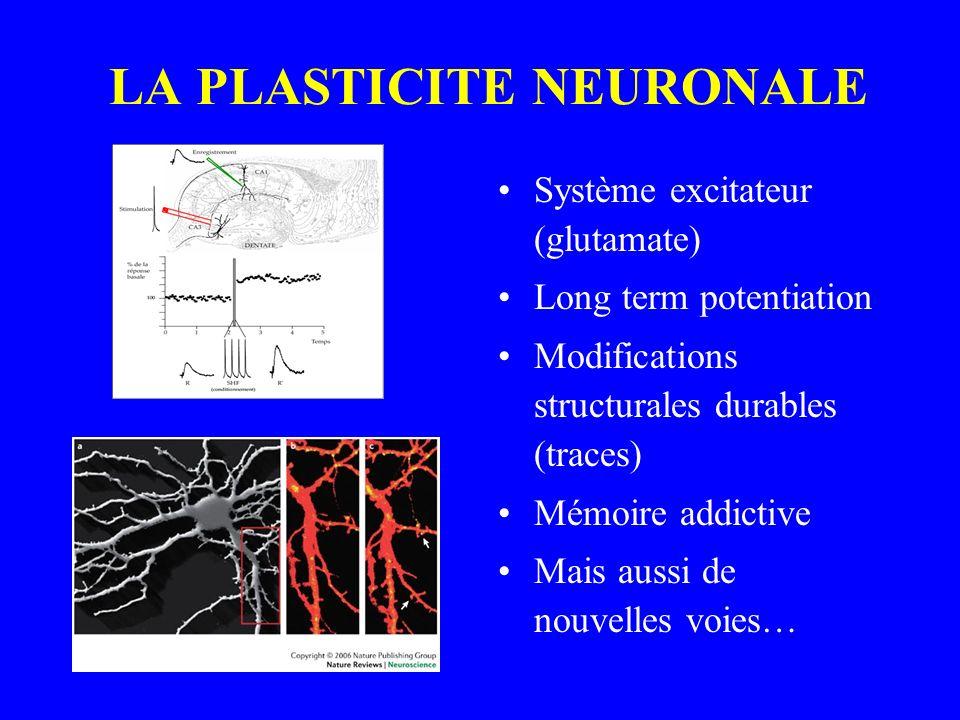 LA PLASTICITE NEURONALE