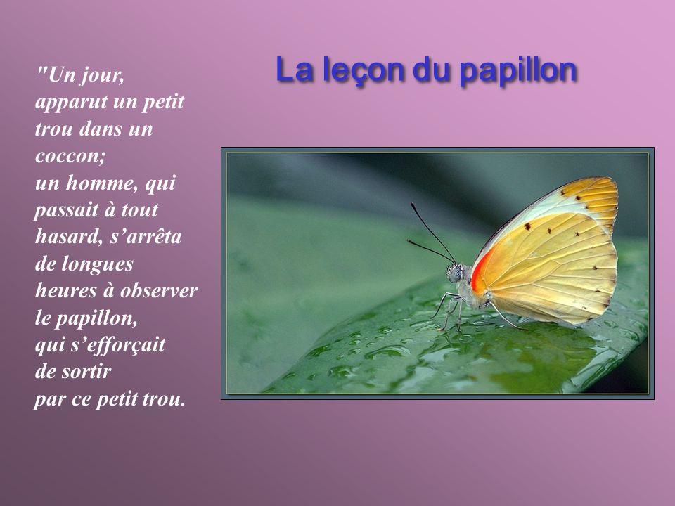 La leçon du papillon Un jour, apparut un petit trou dans un coccon;