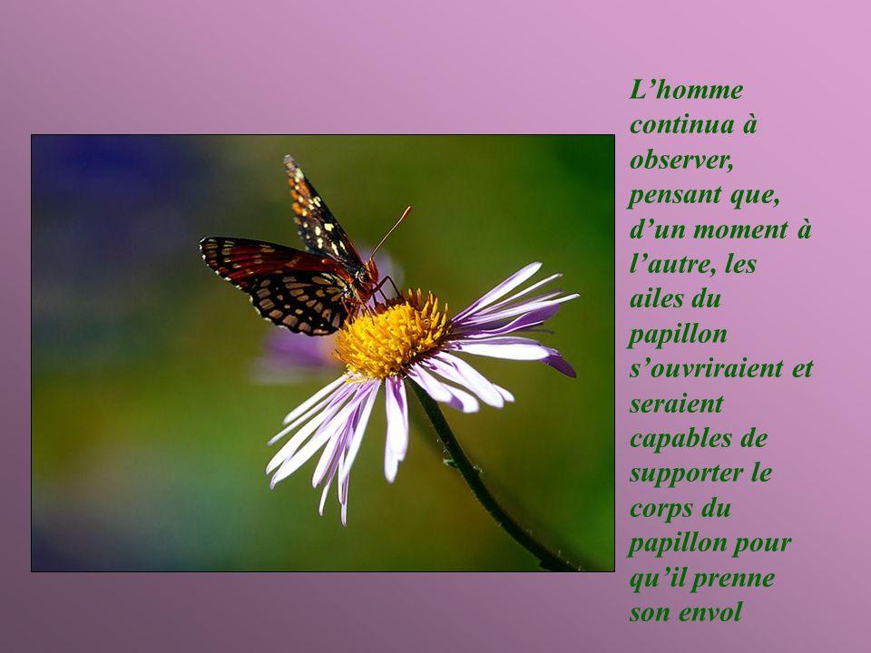 L'homme continua à observer, pensant que, d'un moment à l'autre, les ailes du papillon s'ouvriraient et seraient capables de supporter le corps du papillon pour qu'il prenne son envol