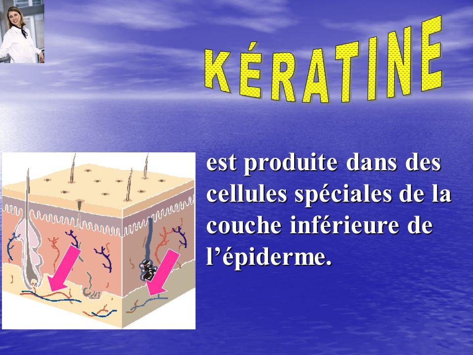 KÉRATINE est produite dans des cellules spéciales de la couche inférieure de l'épiderme.