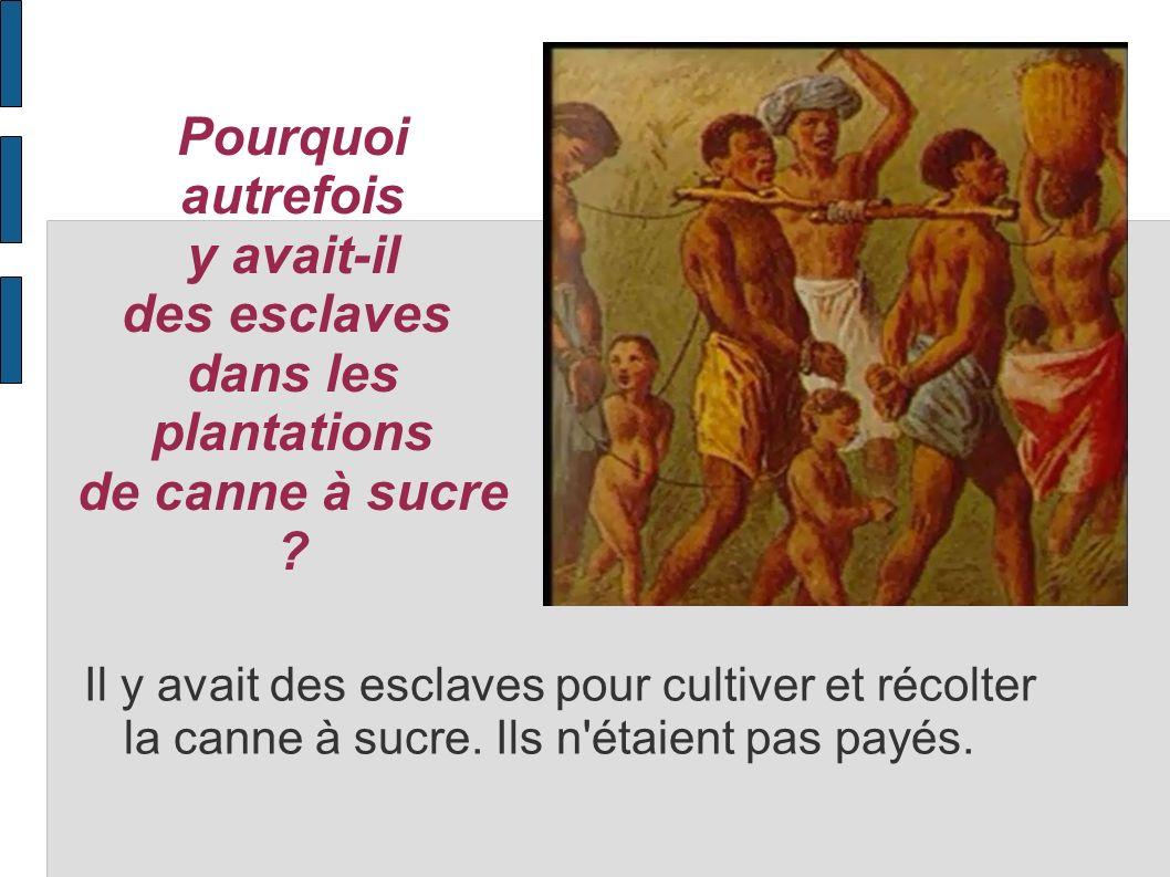 Pourquoi autrefois y avait-il des esclaves dans les plantations de canne à sucre