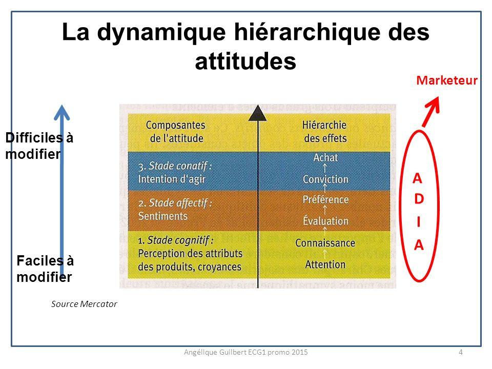 La dynamique hiérarchique des attitudes