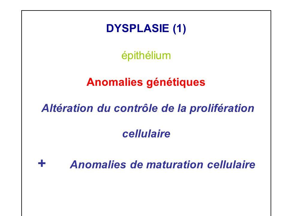 Altération du contrôle de la prolifération cellulaire
