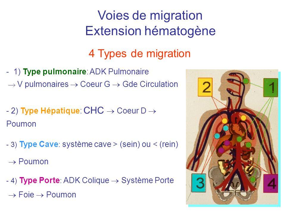 Voies de migration Extension hématogène 4 Types de migration