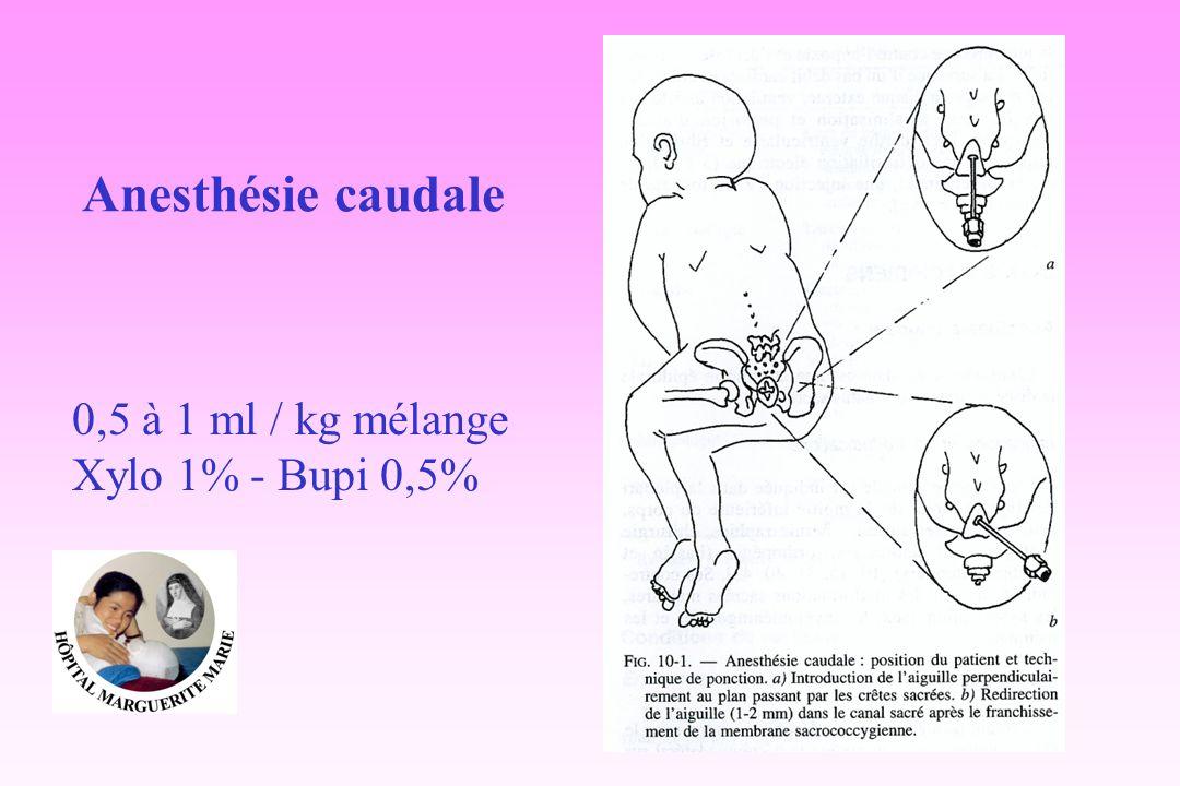 Anesthésie caudale 0,5 à 1 ml / kg mélange Xylo 1% - Bupi 0,5%