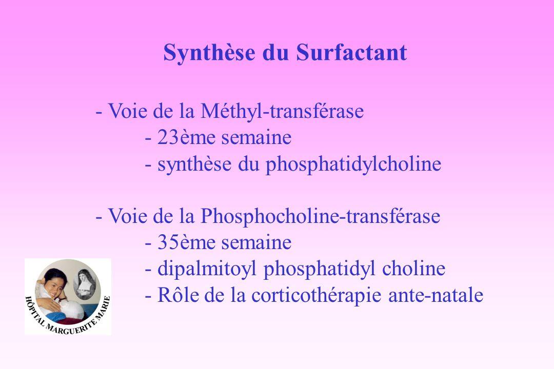 Synthèse du Surfactant