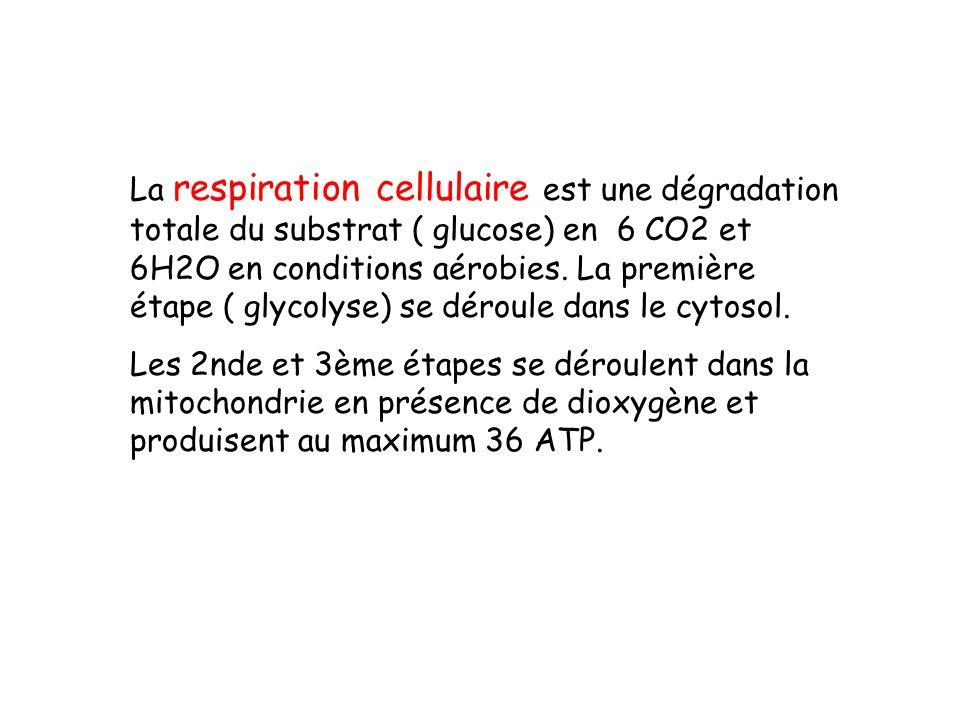 La respiration cellulaire est une dégradation totale du substrat ( glucose) en 6 CO2 et 6H2O en conditions aérobies. La première étape ( glycolyse) se déroule dans le cytosol.