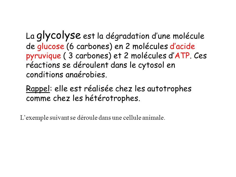 La glycolyse est la dégradation d'une molécule de glucose (6 carbones) en 2 molécules d'acide pyruvique ( 3 carbones) et 2 molécules d'ATP. Ces réactions se déroulent dans le cytosol en conditions anaérobies.