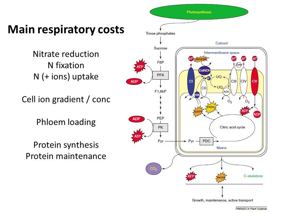 Main respiratory costs