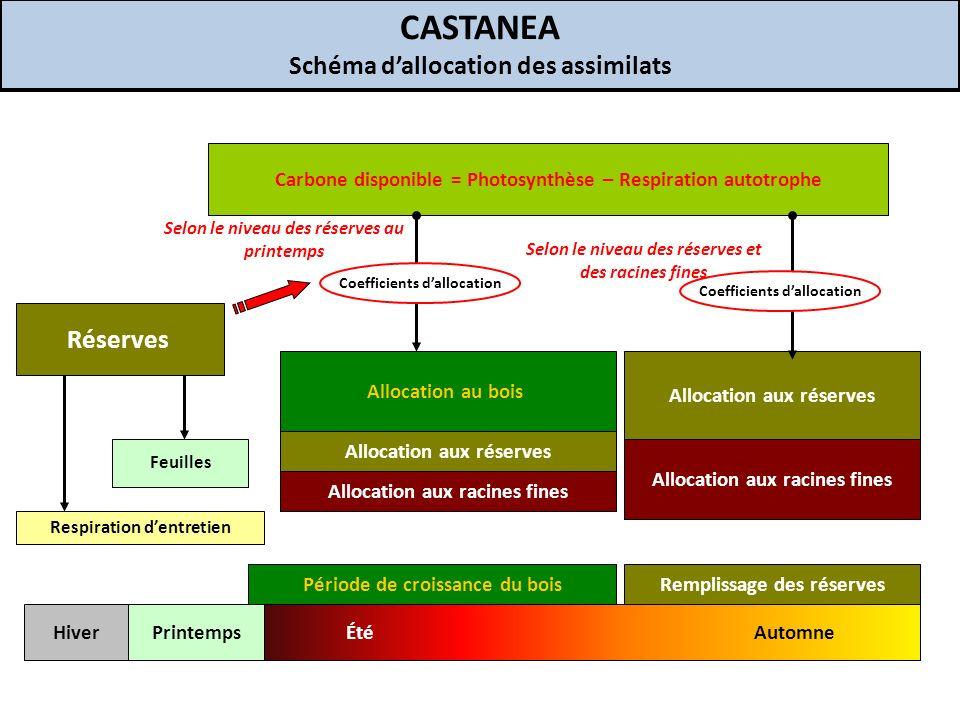 CASTANEA Schéma d'allocation des assimilats Réserves