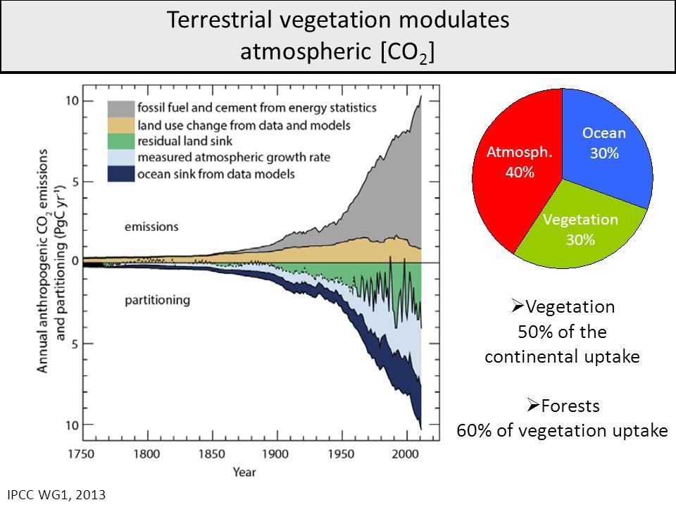 Terrestrial vegetation modulates