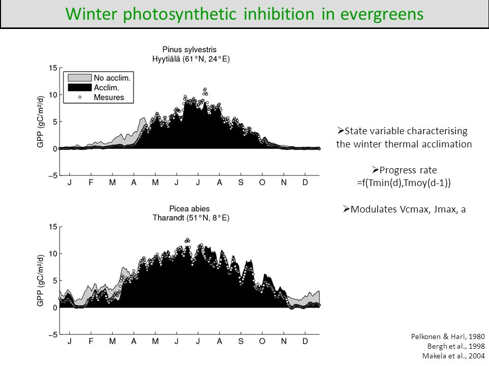 Winter photosynthetic inhibition in evergreens