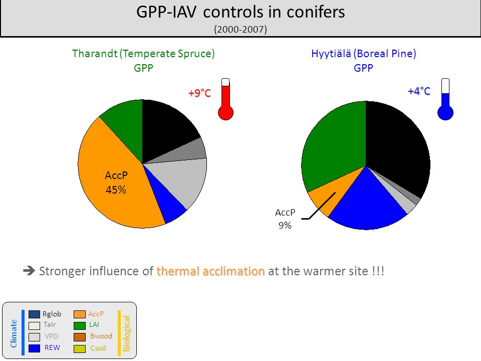 GPP-IAV controls in conifers