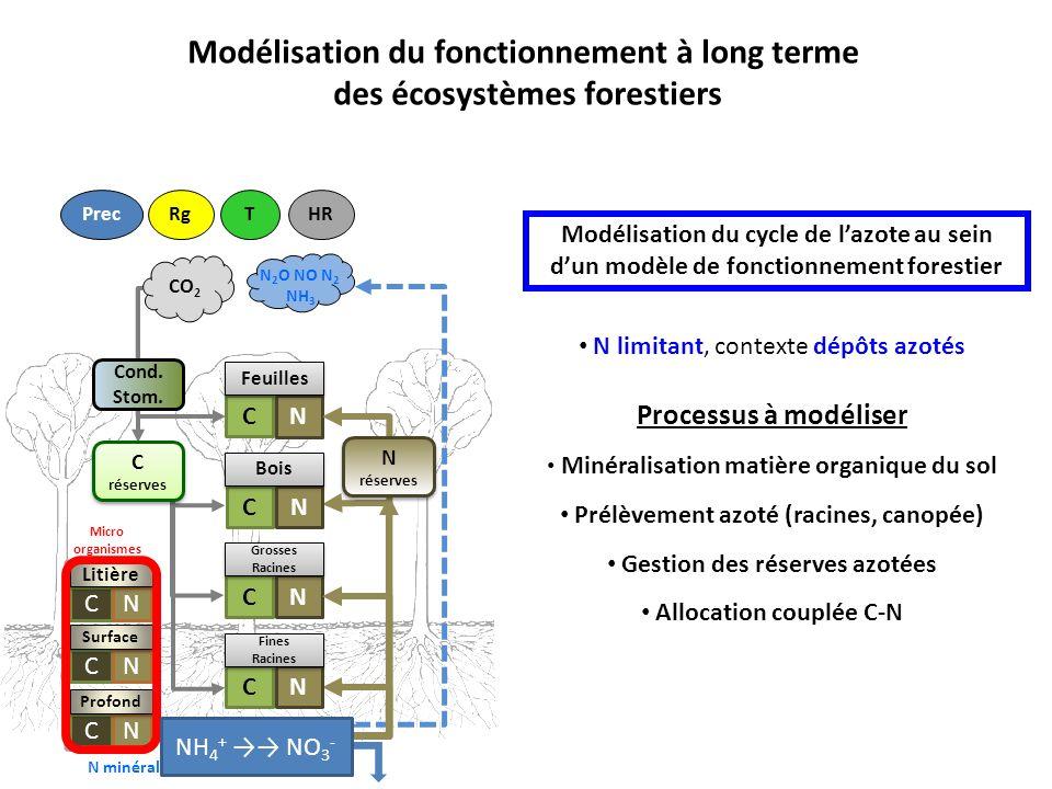Modélisation du fonctionnement à long terme des écosystèmes forestiers