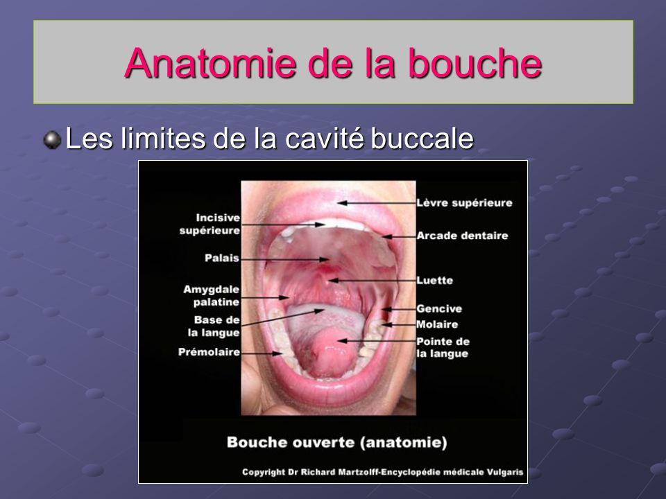Anatomie de la bouche Les limites de la cavité buccale Les lèvres