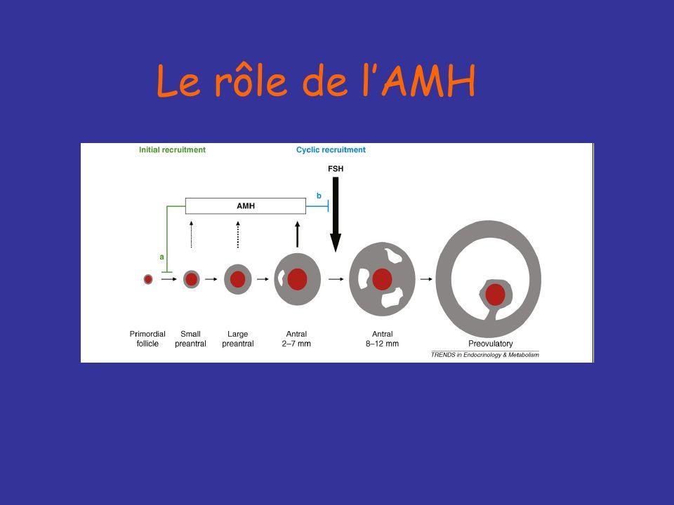 Le rôle de l'AMH