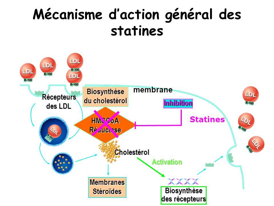 Mécanisme d'action général des statines