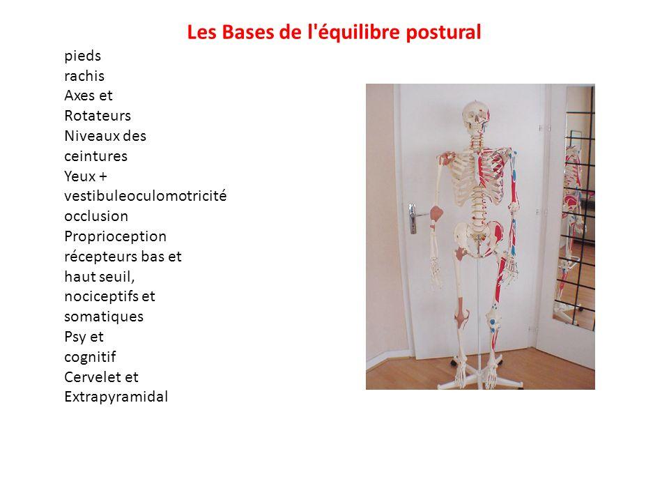 Les Bases de l équilibre postural