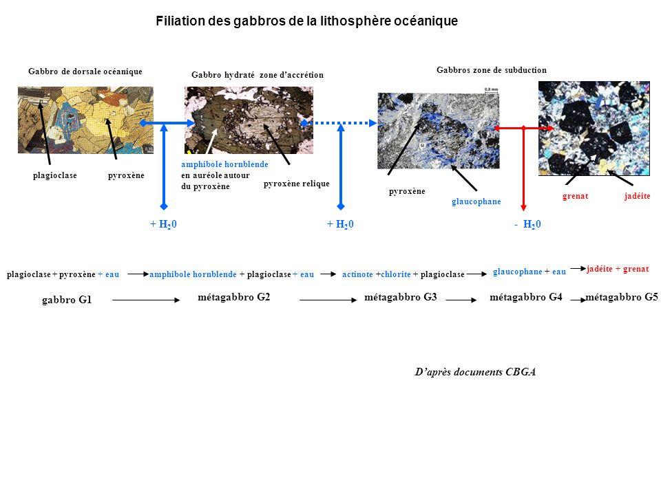 Filiation des gabbros de la lithosphère océanique