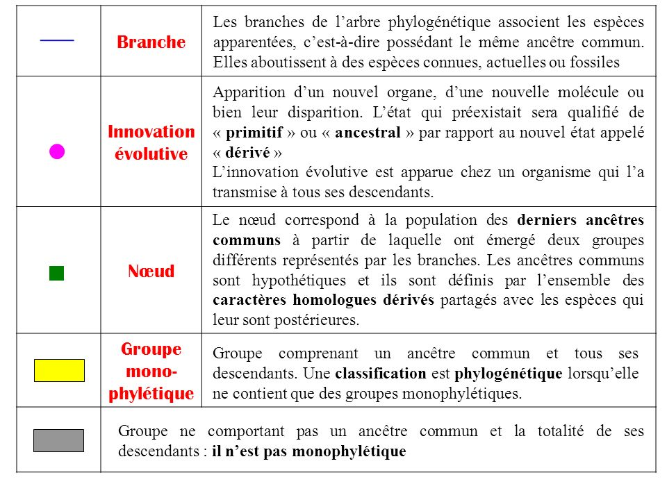 Groupe mono-phylétique