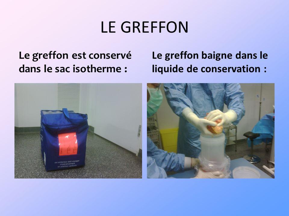 LE GREFFON Le greffon est conservé dans le sac isotherme :
