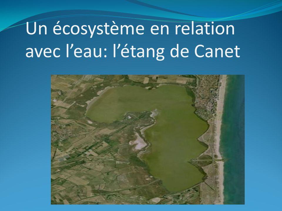 Un écosystème en relation avec l'eau: l'étang de Canet