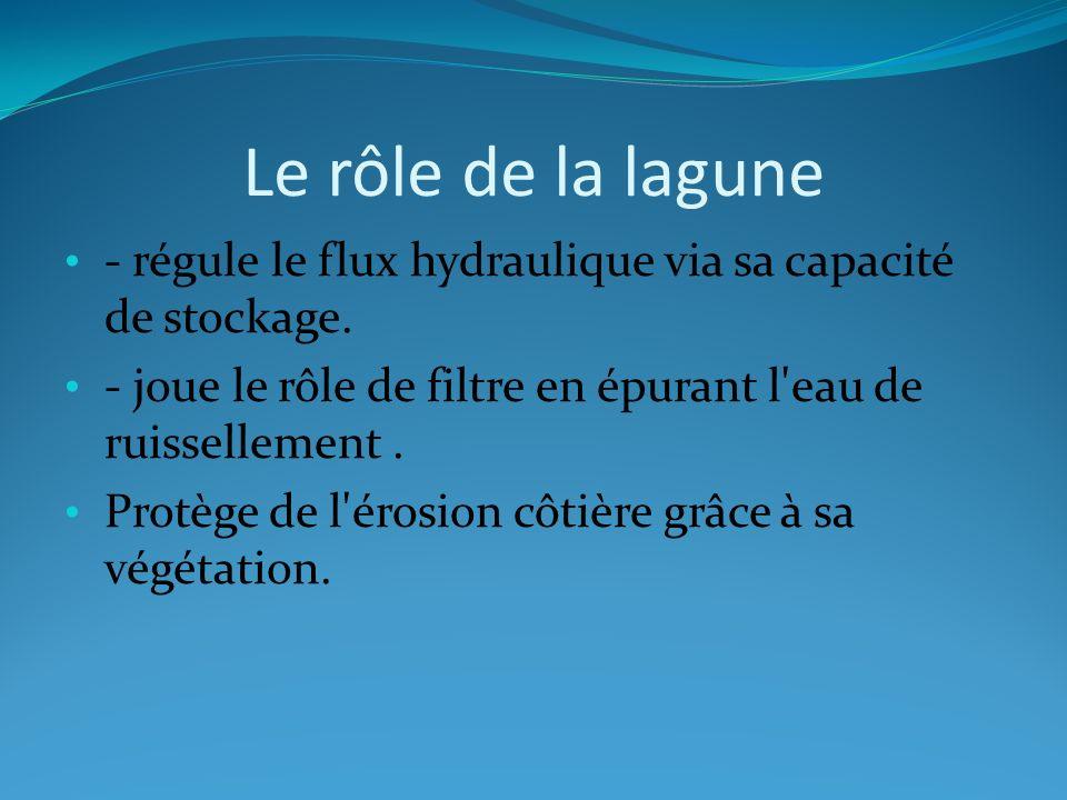 Le rôle de la lagune - régule le flux hydraulique via sa capacité de stockage. - joue le rôle de filtre en épurant l eau de ruissellement .