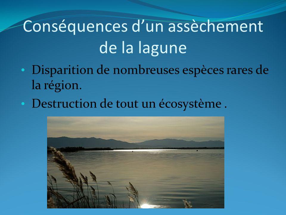 Conséquences d'un assèchement de la lagune