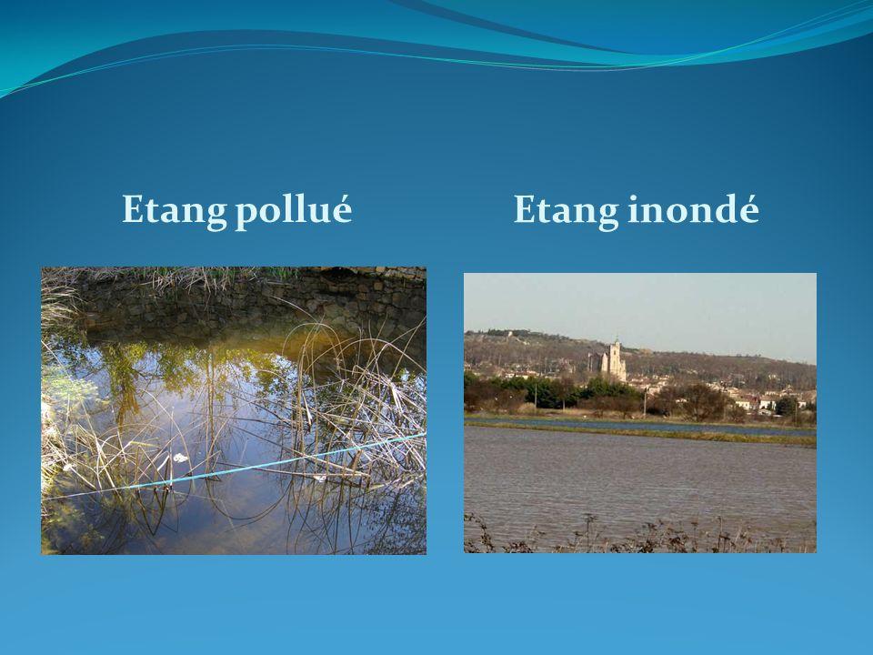 Etang pollué Etang inondé