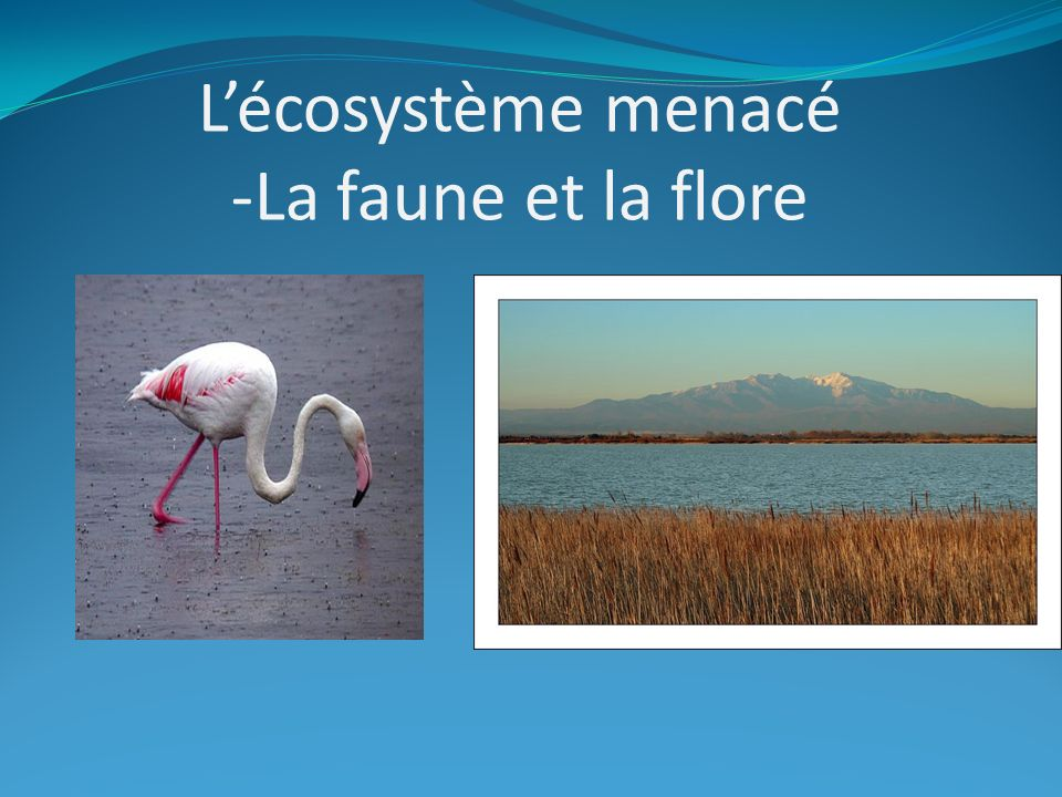L'écosystème menacé -La faune et la flore