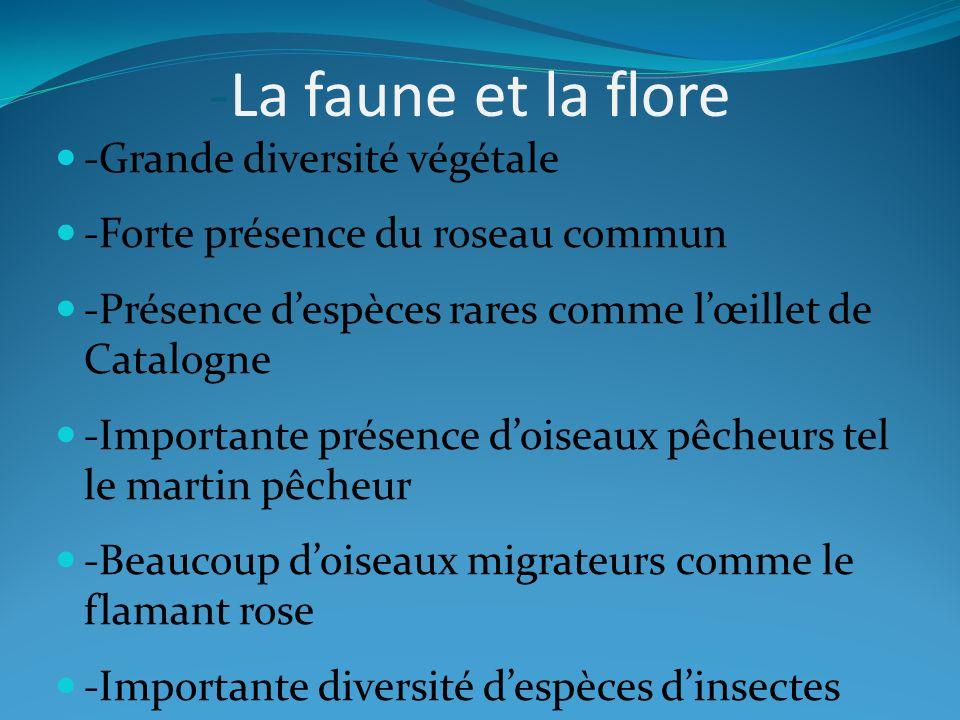 -La faune et la flore -Grande diversité végétale