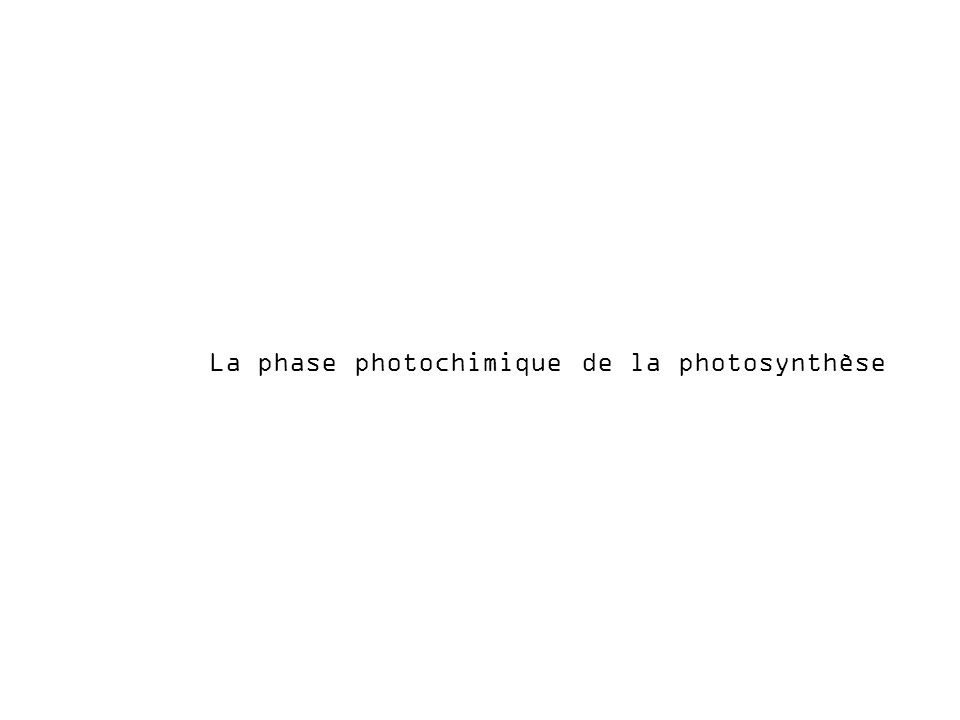 La phase photochimique de la photosynthèse