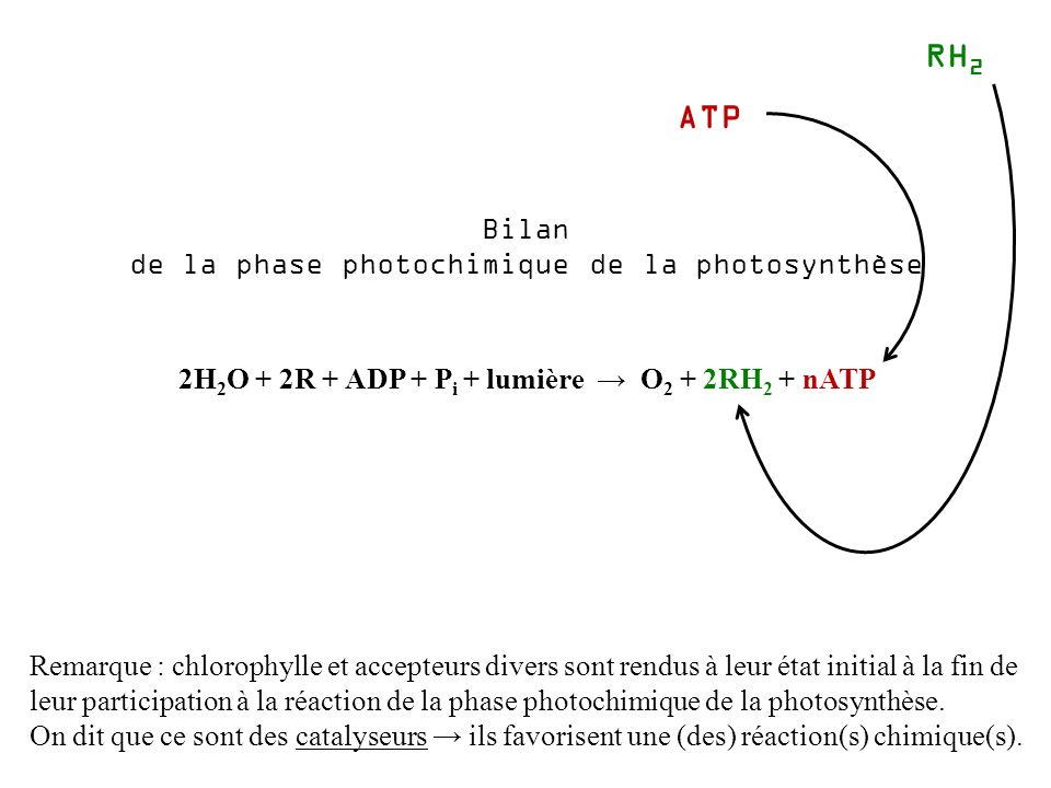 de la phase photochimique de la photosynthèse