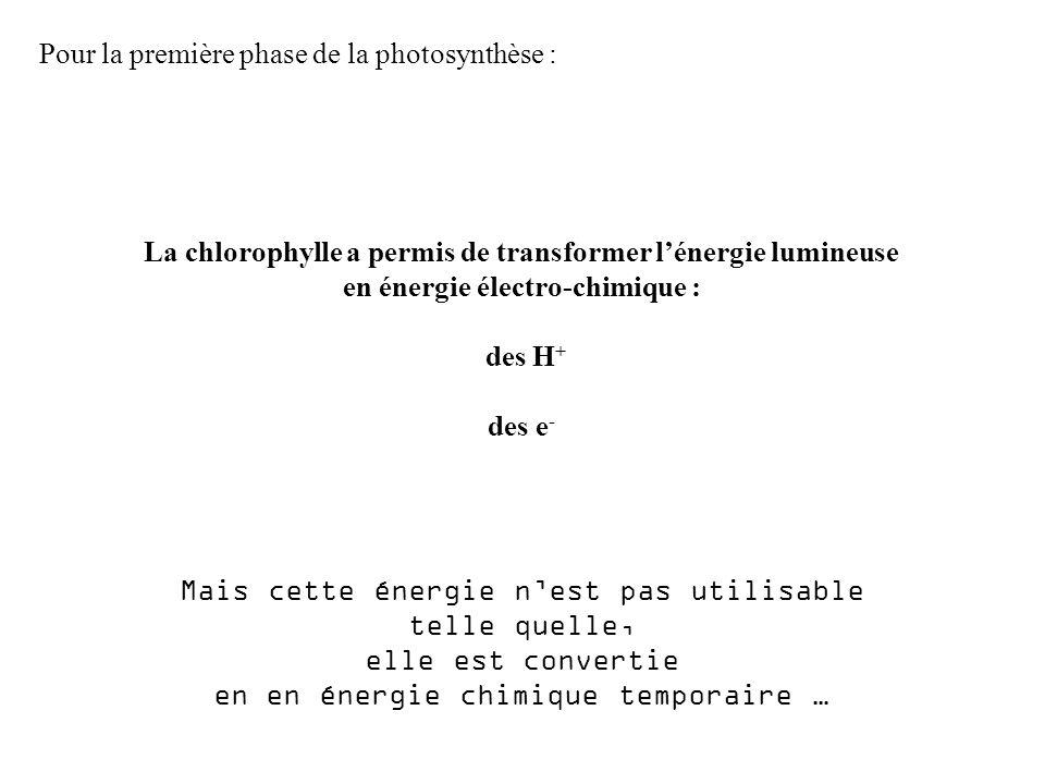 Pour la première phase de la photosynthèse :