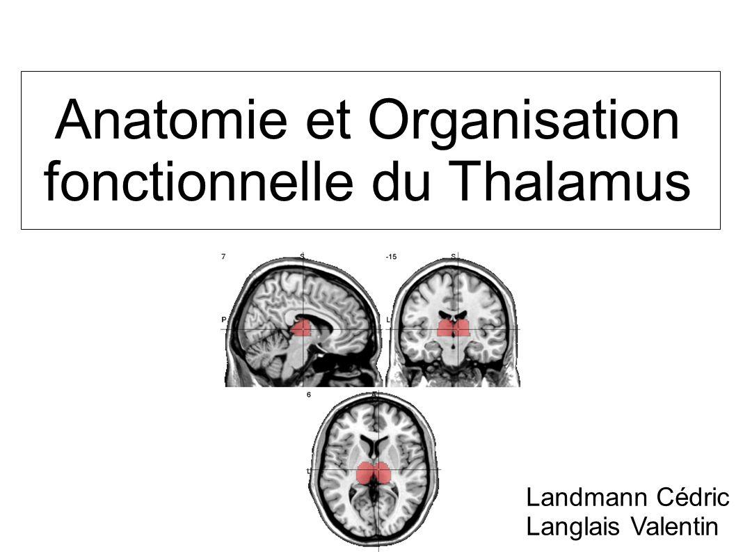 Anatomie et Organisation fonctionnelle du Thalamus