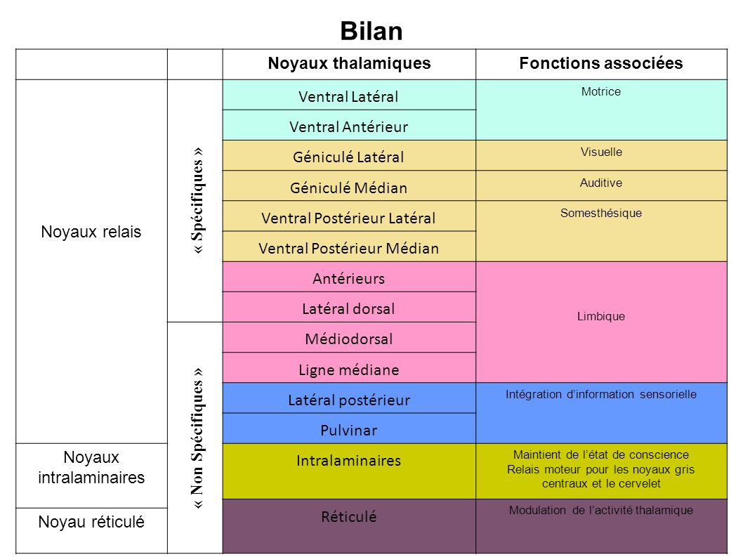 Bilan Noyaux thalamiques Fonctions associées Noyaux relais