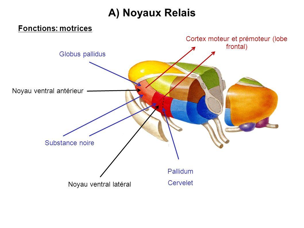 A) Noyaux Relais Fonctions: motrices