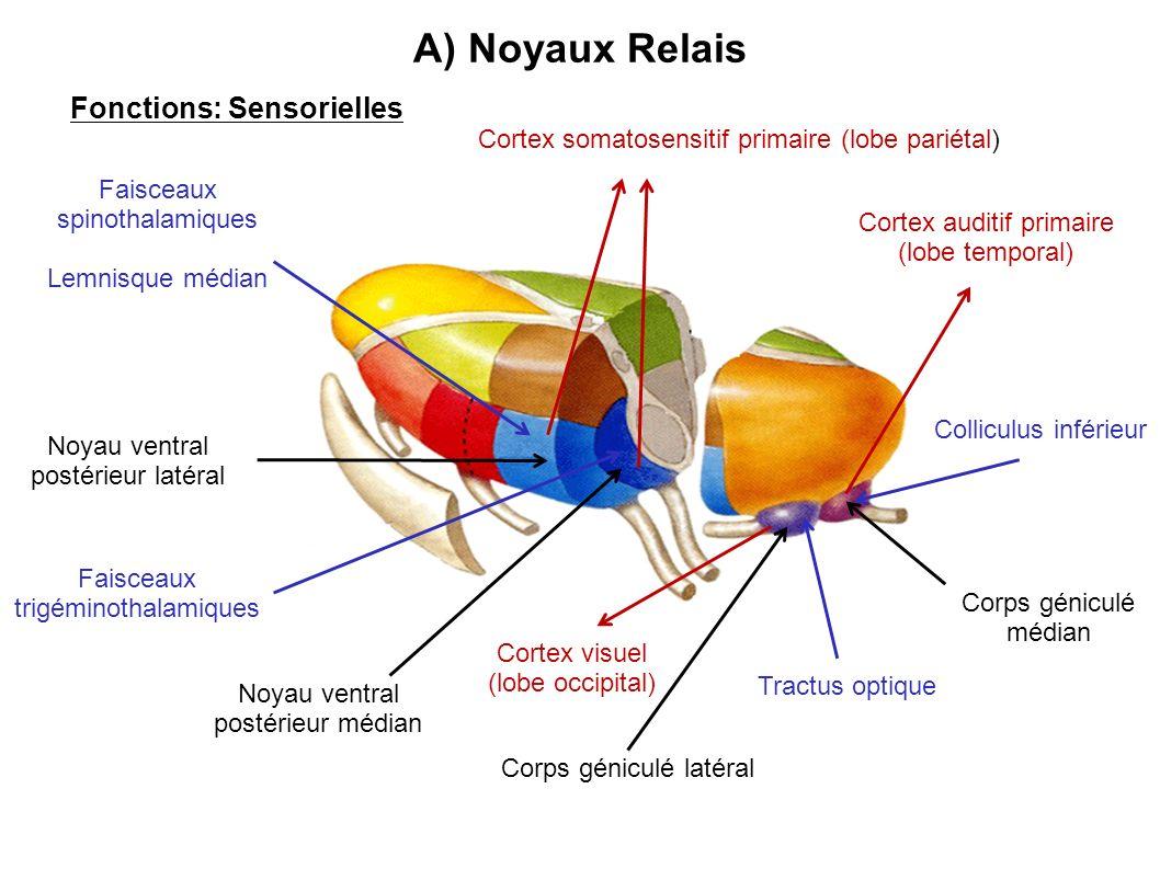 Fonctions: Sensorielles